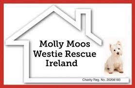 Molly Moo Rescue